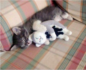 Animals With Stuffed Animals Of Themselves (33 photos) 10