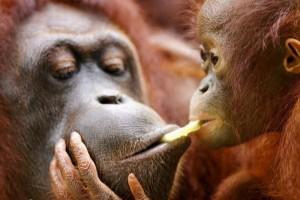 Animal Planet (34 photos) 10
