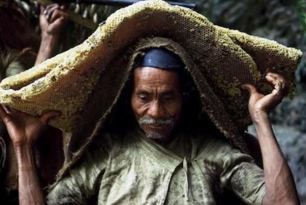 Wild Honey Hunting In Nepal (13 photos) 11