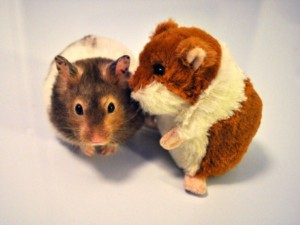 Animals With Stuffed Animals Of Themselves (33 photos) 11