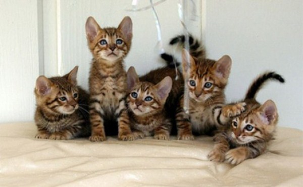 Cat Family Portraits (16 photos) 1