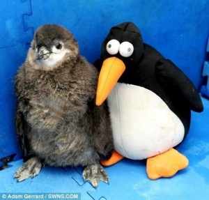 Animals With Stuffed Animals Of Themselves (33 photos) 12