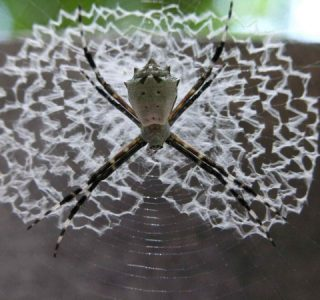 Spiders Who Decorate Their Webs (16 photos)