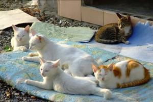 Cat Family Portraits (16 photos) 12