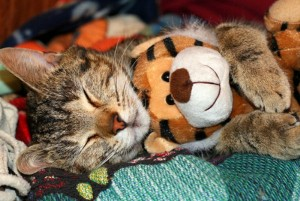 Animals With Stuffed Animals Of Themselves (33 photos) 13
