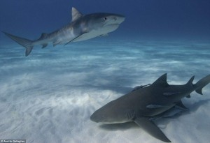 The Most Spectacular Underwater Images Ever Seen (14 photos) 13
