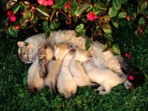 Cat Family Portraits (16 photos) 14