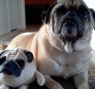 Animals With Stuffed Animals Of Themselves (33 photos)