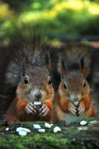 Adorable Squirrel (25 photos) 16