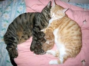 Cat Family Portraits (16 photos) 16