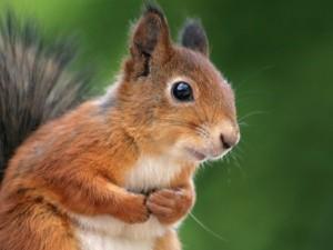 Adorable Squirrel (25 photos) 19