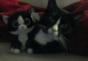 Animals With Stuffed Animals Of Themselves (33 photos) 21