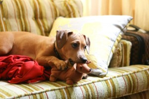 Animals With Stuffed Animals Of Themselves (33 photos) 22