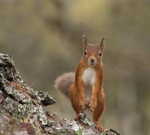 Adorable Squirrel (25 photos) 22