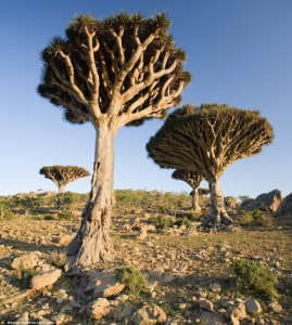 Alien-looking Landscapes On Earth (25 photos) 22