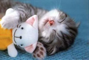 Animals With Stuffed Animals Of Themselves (33 photos) 25