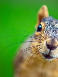 Adorable Squirrel (25 photos) 25