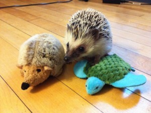 Animals With Stuffed Animals Of Themselves (33 photos) 26