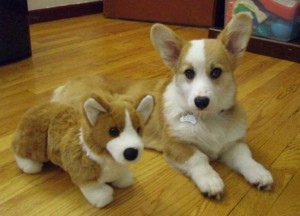 Animals With Stuffed Animals Of Themselves (33 photos) 27