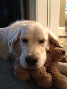 Animals With Stuffed Animals Of Themselves (33 photos) 28