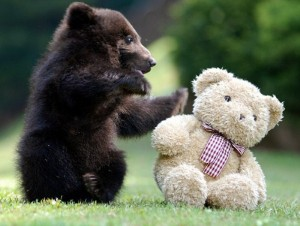 Animals With Stuffed Animals Of Themselves (33 photos) 29