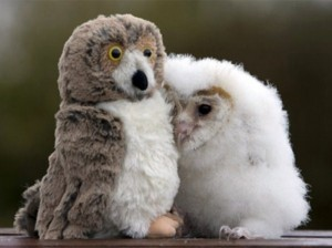 Animals With Stuffed Animals Of Themselves (33 photos) 33