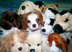 Animals With Stuffed Animals Of Themselves (33 photos) 3