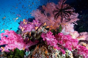 The Most Spectacular Underwater Images Ever Seen (14 photos) 4
