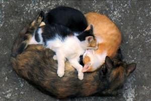 Cat Family Portraits (16 photos) 4