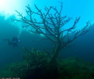 Beauty of Blue Lake (10 photos) 4