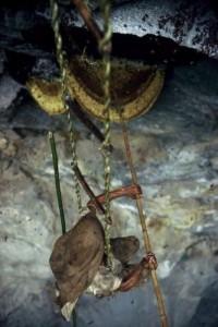Wild Honey Hunting In Nepal (13 photos) 5