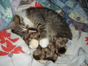 Animals With Stuffed Animals Of Themselves (33 photos) 5