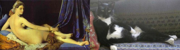 57 Cats Imitating Art (21 photos)