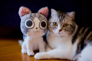 Animals With Stuffed Animals Of Themselves (33 photos) 6