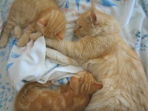 Cat Family Portraits (16 photos) 6