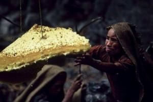 Wild Honey Hunting In Nepal (13 photos) 7