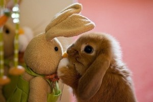 Animals With Stuffed Animals Of Themselves (33 photos) 7