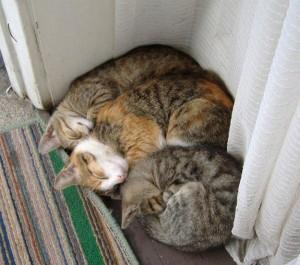 Cat Family Portraits (16 photos) 7