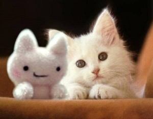 Animals With Stuffed Animals Of Themselves (33 photos) 8