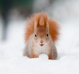 Adorable Squirrel (25 photos)