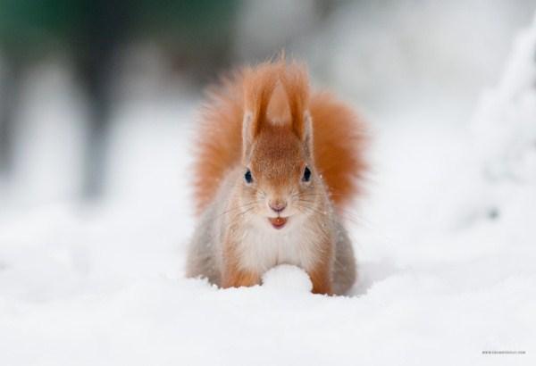 Adorable Squirrel (25 photos) 8