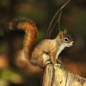 Adorable Squirrel (25 photos) 9