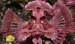 The Most Spectacular Underwater Images Ever Seen (14 photos) 9