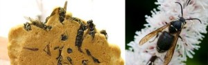 Creepy Foods (32 photos) 3