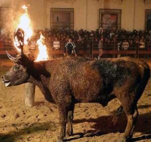 Bizarre Spanish Bull Burning Festival (10 photos) 10