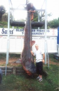 Biggest Sharks Ever Caught (8 photos) 1