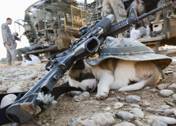 Animals in War Zones (17 photos) 1