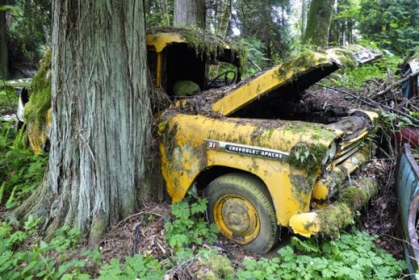 Car Cemetery in a Forest (30 photos) 1