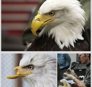 Animal Prosthetics (8 photos)