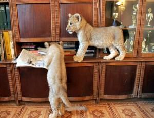 Unusual Pets (18 photos) 12